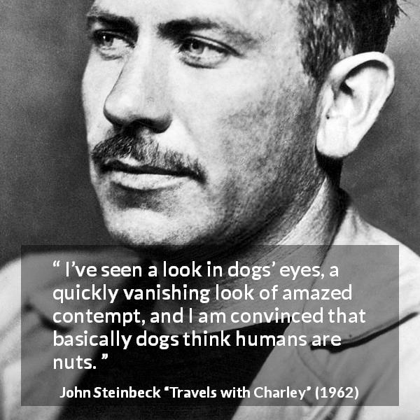 "John Steinbeck about contempt (""Travels with Charley"", 1962) - I've seen a look in dogs' eyes, a quickly vanishing look of amazed contempt, and I am convinced that basically dogs think humans are nuts."